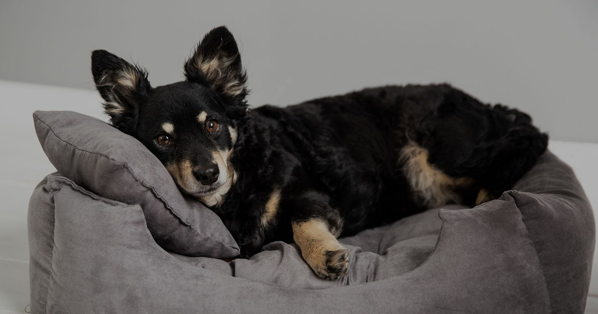 Wszystko Dla Psa I Kota Produkty Dla Twojego Pupila Netto
